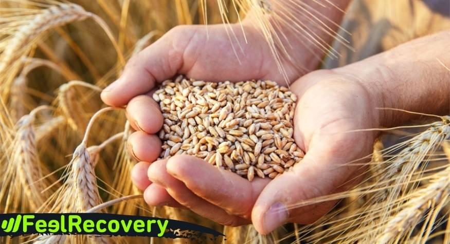 ¿Cuáles son las mejores semillas para rellenar los sacos térmicos?