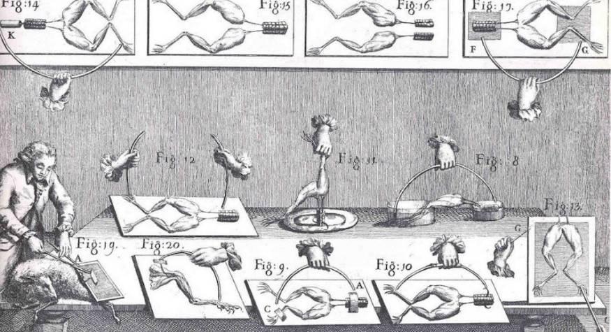 Historia y origen ¿Cuándo se comenzó a usar electricidad para estimular los músculos?