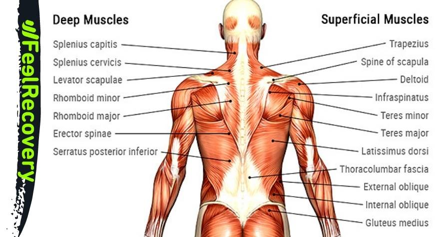 What types of back pain are the most common and what are their causes?