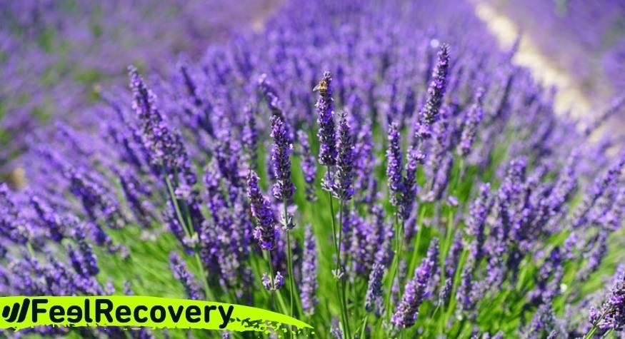 ¿Cuáles son las mejores flores y hierbas aromáticas para hacer tu saco de semillas casero?