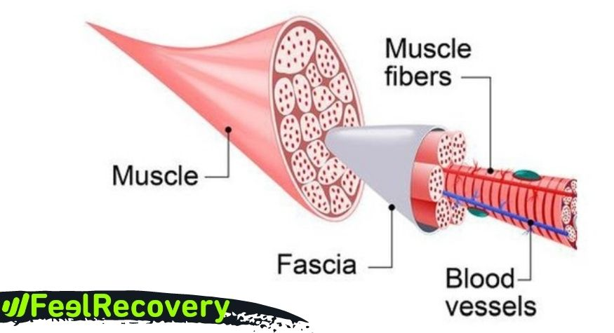 What is myofascial release therapy and how does vibration influence it?