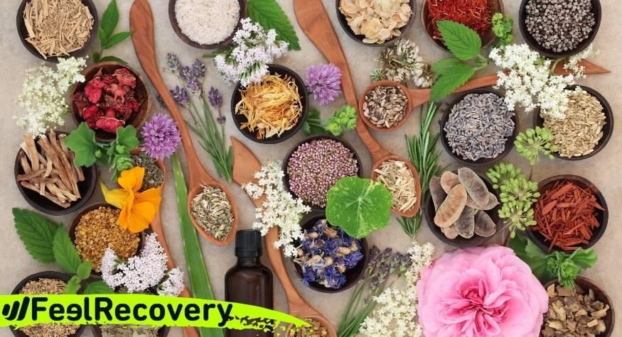 terapias alternativas efectivas